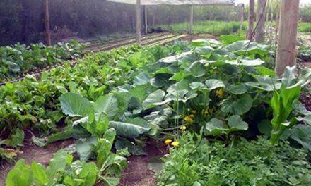Agro Se Muestra en la AgroTécnica Rufino el 5 de octubre