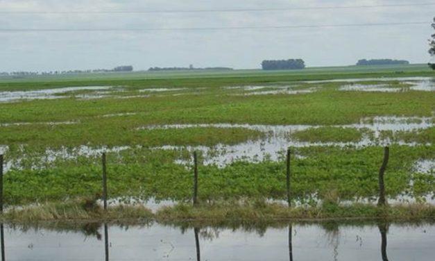 Variabilidad Climática y Anegamientos en la Pampa Húmeda Argentina