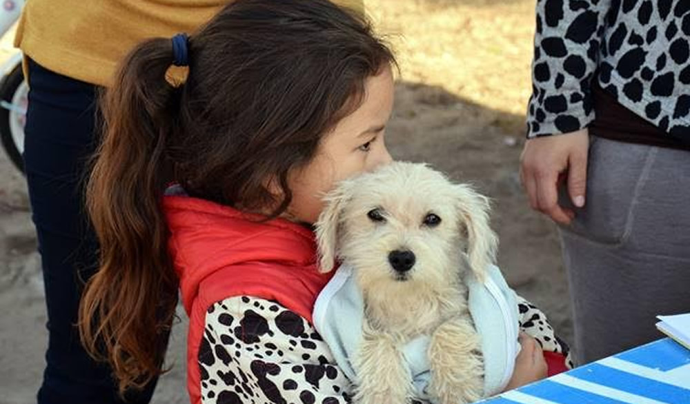 Vacunación antirrábica para mascotas