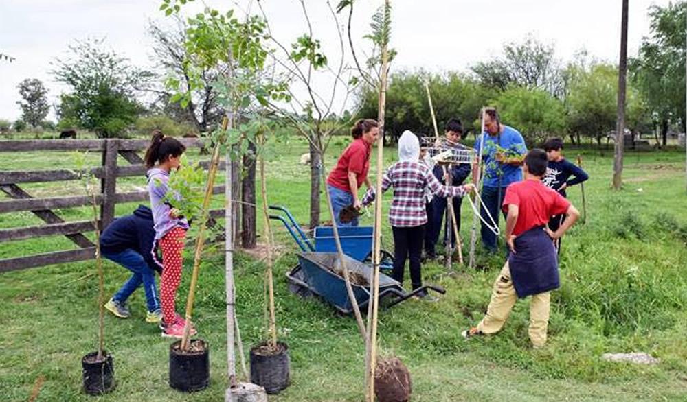 Plantación de árboles en la 6426