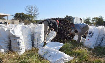 Miles de papas para el municipio