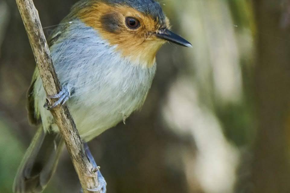 Salta enamora con sus aves y naturaleza