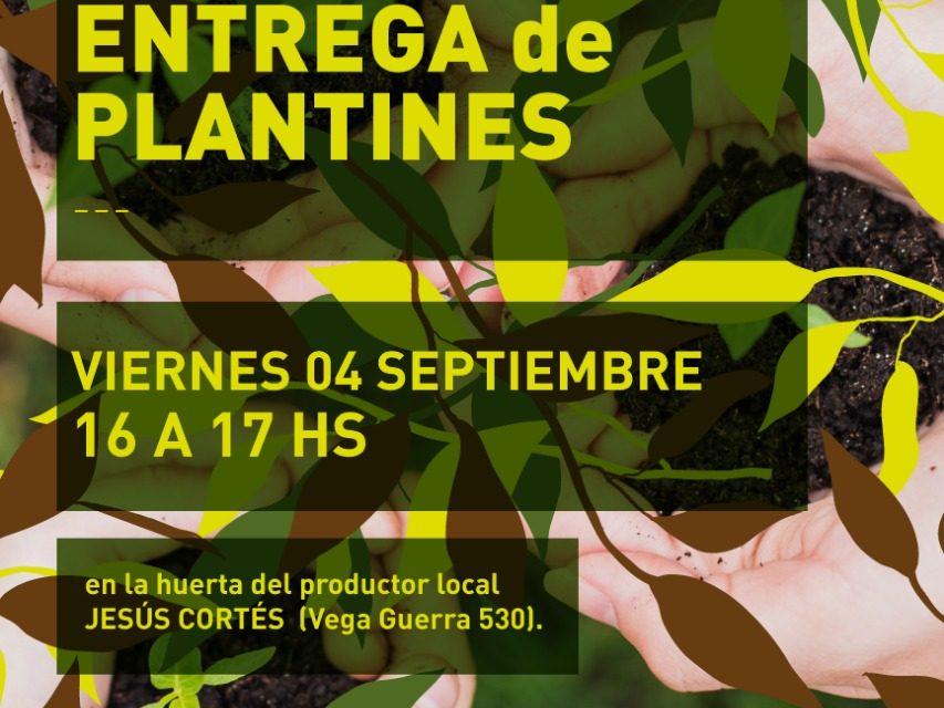 Este viernes entrega de plantines en lo de Cortés