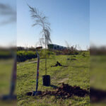 El objetivo es plantar 10  mil árboles