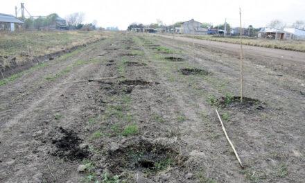 Se robaron 50 plantas del Plan de Forestación